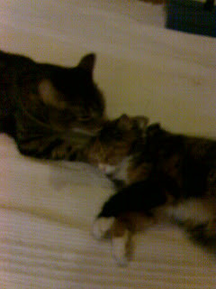 My eldest sister's cats; the male tabby, Neeko (left) and the female ...