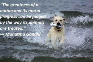 Famous quotes about animals 3