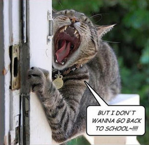 funny cat doesn't want to go back to school