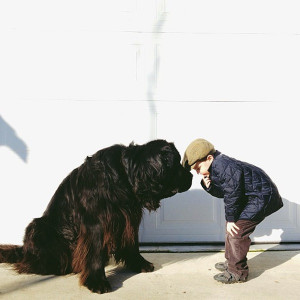 ... Julian and their fuzzy, friendly five-year-old Newfoundland dog, Max