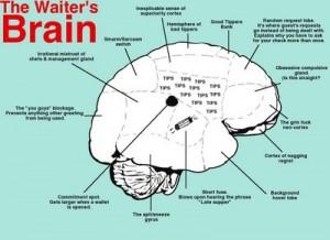 The waiters brain
