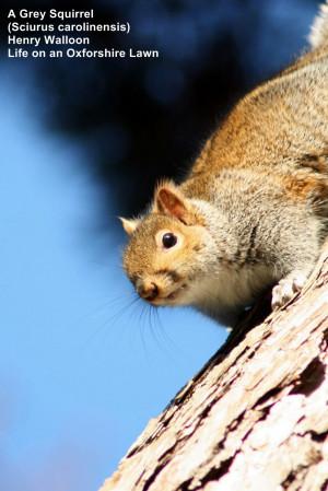 squirrel quotes