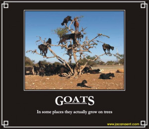 Goats, Demotivation, Demotivational, Demotivational Posters, Jacana ...