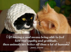 ... And Gratitude, Then Animals Are Better Off Than A Lot Of Humans