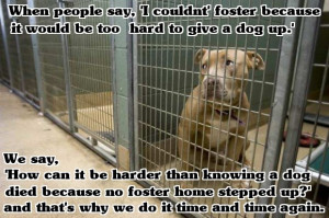 Our New Foster Dog - Blog the Change