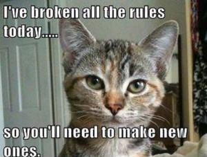 Bad Kitty (1)