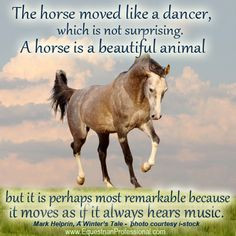 moved like a dancer, which is not surprising. The horse is a beautiful ...