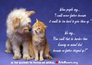 quotes about animals love
