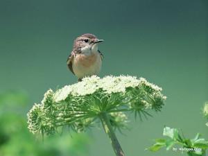 Four Seasons of Birds - Lovely Bird in Spring (Vol.1) - Little Birds ...