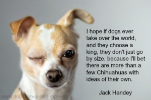 ... Quotes Before, Chihuahuas Por, Jack Handey Quotes, Chihuahua Puppies
