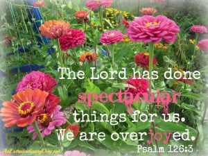 Pink Zinnias | The Lord has done spectacular things for us. Psalm 126 ...