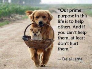 28 december 2012|07:30| Quotes | Taggar: quotes Dalai Lama