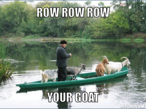 Goat memes are all the rage!