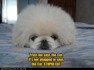 ... about dogs cats are smarter than dogs funny dog quotes funny dog one