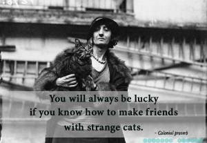 Proverb cat quotes