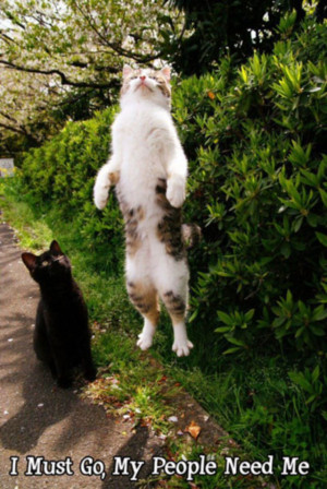 Funny Animals that are simply awesome (36 Photos)