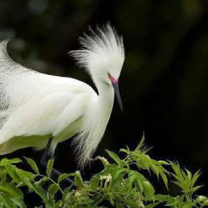 Beautiful Bird, Great Quote