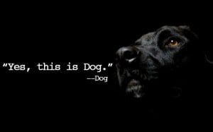 Yes this is Dog. – Dog Inspirational Quote