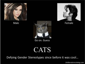 Male Gender Stereotypes