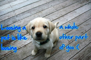In Honor and Memory of our beloved dog