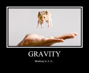 Funny Hamsters - random Photo