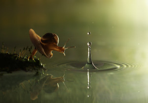 "Snail and the raindrop"" by Vadim Trunov"