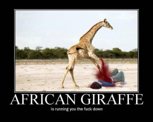 similar galleries funny giraffe pictures with captions funny