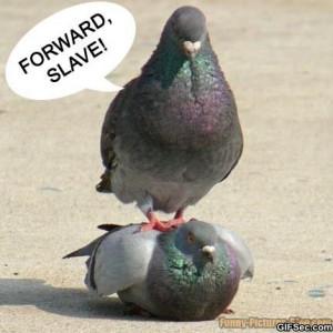 lol-slave.jpg