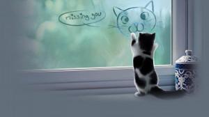 ... quote funny humor grumpy kitten sad love mood wallpaper background
