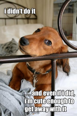 Funny Cute Dogs photos and funny Cute Dogs pictures