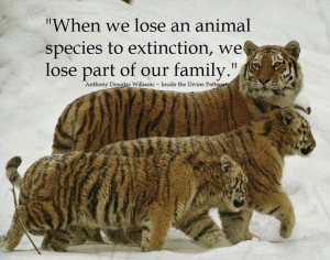 animal extinction
