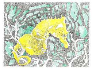 Drawing Seahorse Drawings