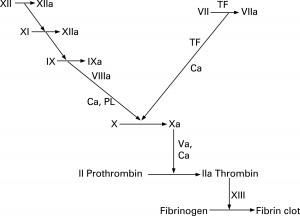 Intrinsic and Extrinsic Coagulation Cascade