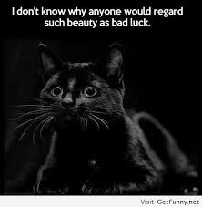 Black Cat Funny Quotes