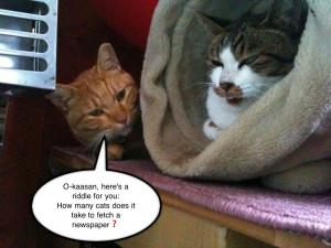 Cat Joke. Mother's Day Jokes Humor. View Original . [Updated on 09/20 ...