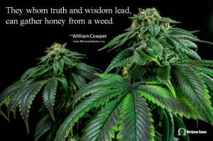 Marijuana Quote Image - Wisdom by Cowper 600x400