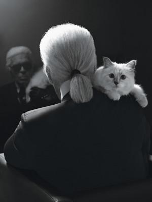 cat photography fashion inspiration kitten chanel karl lagerfeld muse ...