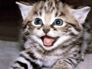 Kittens Cute !!!