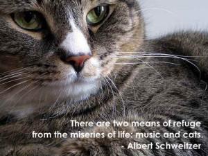Cat purring quote