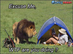 ... funny sayings,funny african lions,lion king funny,funny lion pictures