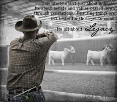cattle quotes pinned by emily lynn more cattle show quotes livestock ...