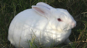 ... of cute happy pet animals and i made a couple pets happy pet rabbit