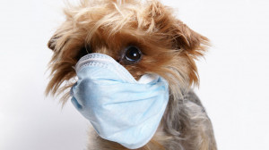 Is Your Pet Making You Sick?