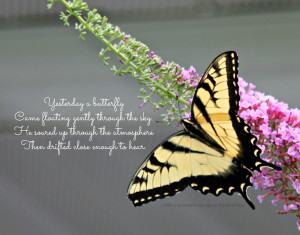 Yesterday a butterfly...
