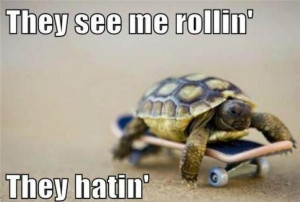 don't be hatin'