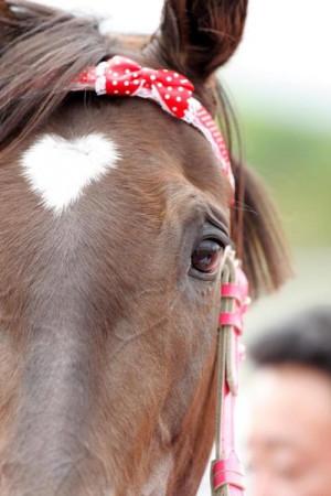 Sweet Horse!
