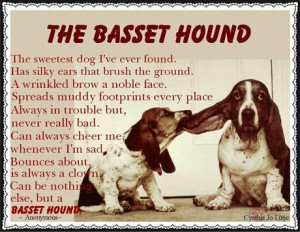 to try to take the dog s food away even sweet basset hounds can be ...