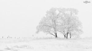 snow winter landscape HD Wallpaper