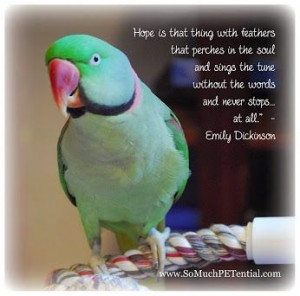 Lisa Desatnik - Google+ #parrot quote about hope