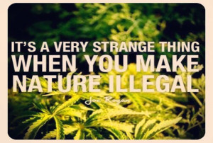 Joe Rogan is a marijuana legalization advocate and this is one of a ...